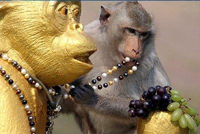 Monkey Buffet Festival – настоящий пир для обезьян
